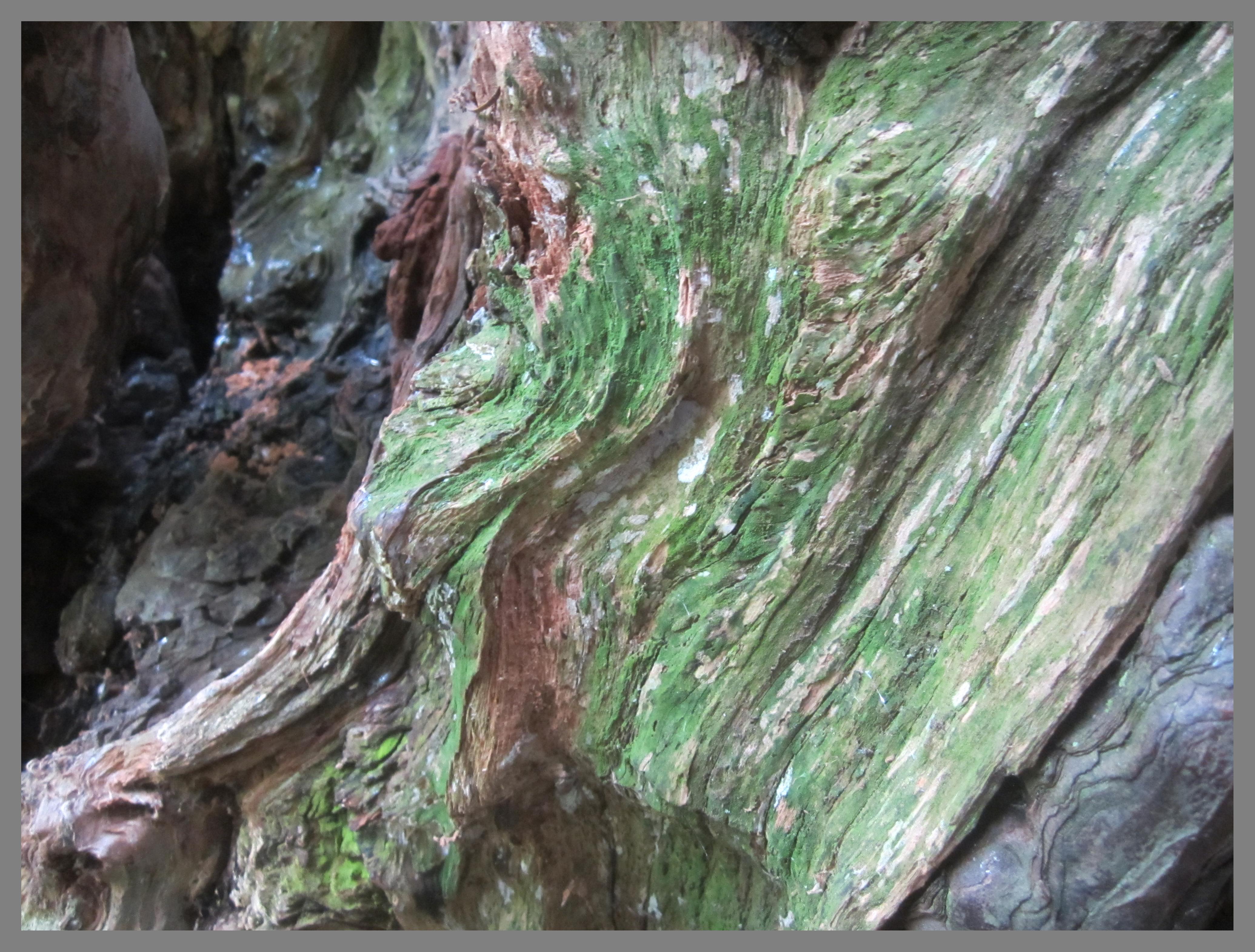 william blake and nature
