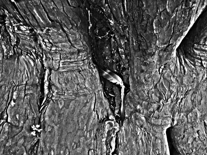 trees knowledge